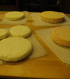 An array of artisan made cheeses