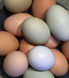 Multi-colored eggs