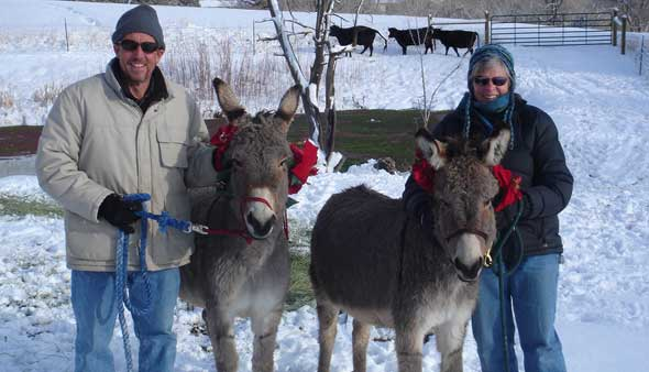 Owners in a snowy paddock with two donkeys wearing red bows for Christmas