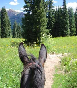 Mule ears seen from the saddle on a ride in the summer high country