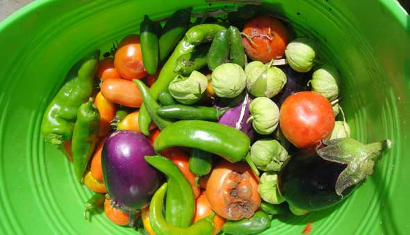 A bright green tub of chiles, tomatillos, eggplant, and tomatoes