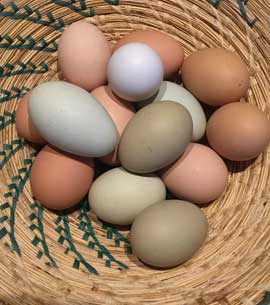 Basket of blue, green and brown eggs